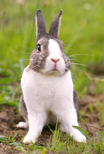 P90X Rabbit